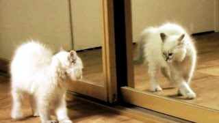Kittens Discovering Mirrors for the First Time