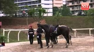 30 horses from police cavalry unit get badges