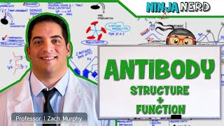 Immunology | Antibody Structure & Function