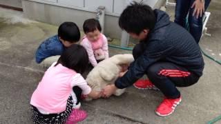 4月12日は恒例のバーベキュー。子供達に大人気の紀州犬牝「ユキ」。こん...