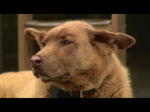 Land of 10,000 Stories: Bruno the dog becomes legendary for daily walks to MN town