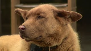 land of 10 000 stories bruno the dog becomes legendary for daily walks to mn town