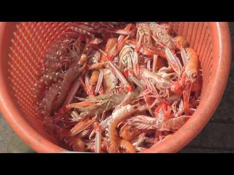 Oban Morsels   Fresh Fish & Seafood HD