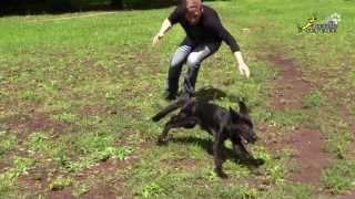 Дрессировка собак, вредная игра со щенком