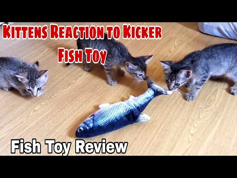Moving Fish Kicker Cat Toy Review 2020! Does It Works? | CatsLifePhils