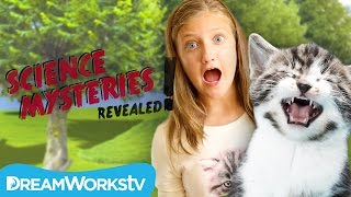 Why Do Cats Hate Everyone? | SCIENCE MYSTERIES REVEALED