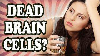 Does Drinking Alcohol Really Kill Brain Cells? — TodayIFoundOut