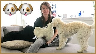CRAZY DOG LADY!