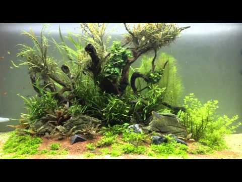 Aquascape Jungle island