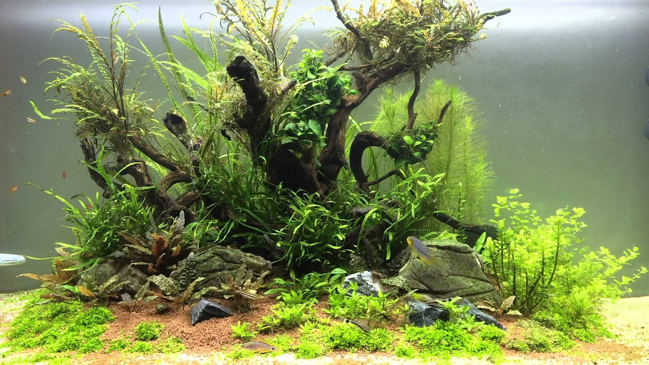 Aquascape Jungle island - YouTube