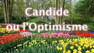 Candide, Chapitre 19