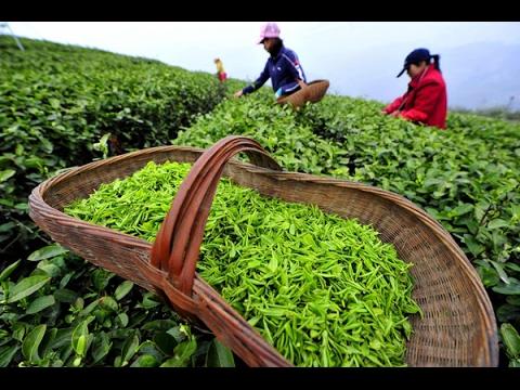 Русские в Китае. Китайский Чай. Рынок в Гуанджоу