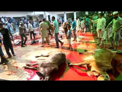 Eid ul Adha 2019 Cow Qurbani Jamia Naeemia  Lahore