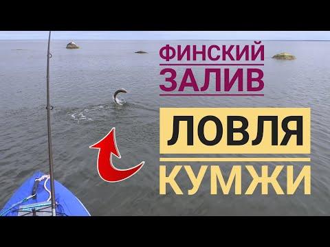 Ловля кумжи в Финском заливе * Meriforelli püük * Sea trout fishing