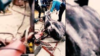 Muere un caballo en la Feria de Abril de Sevilla tras no alimentarle en todo el día