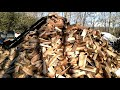 How much firewood can a small proccesor cut in one day?