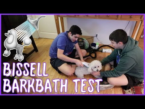 Testing the Bissell BarkBath | A Dog-Bathing Revolution or a Wet Disaster?