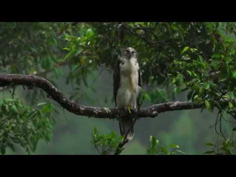 meditation/-focus-and-relaxation-through-nature-(part-4)---cricket-chirping-owl-hooting