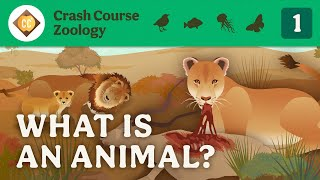 What is an Animal? Crash Course Zoology #1
