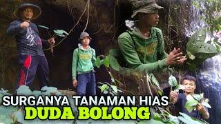 Berburu Tanaman Hias Di Hutan Ketemu Rephidohoraminifera Duda Bolong Youtube