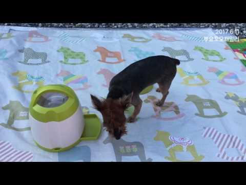 [집] 2017.6.11 '루나'아이큐장난감놀이영상,Yorkshire Terrie,Dog IQ Toy,Trixie Memory Trainer,Activity Games