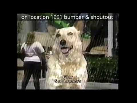 Timeline of KTZOKOFY 19801996 Dog IDs sets and jingles