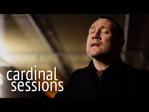 David Gray - Accumulates - CARDINAL SESSIONS
