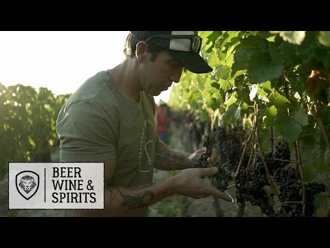 How Wine is Made in South Africa