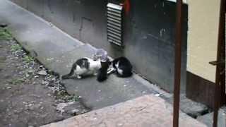 Санкт-Петербург. Коты на Пражской 15. Кормление