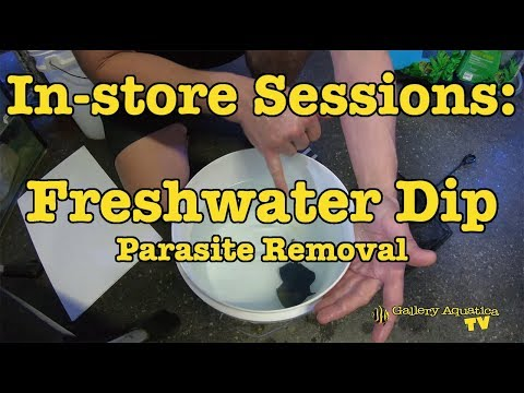 In-store Sessions: Freshwater Dip (Parasite Removal) --- Gallery Aquatica TV