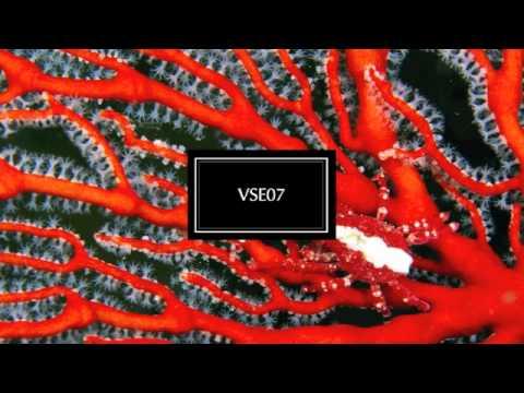 VSE07
