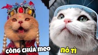 Những chú mèo dễ thương #3 | Boss TikTok