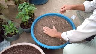 زراعة بذور فاكهة التنين  ... Cultivation of dragon fruit seeds
