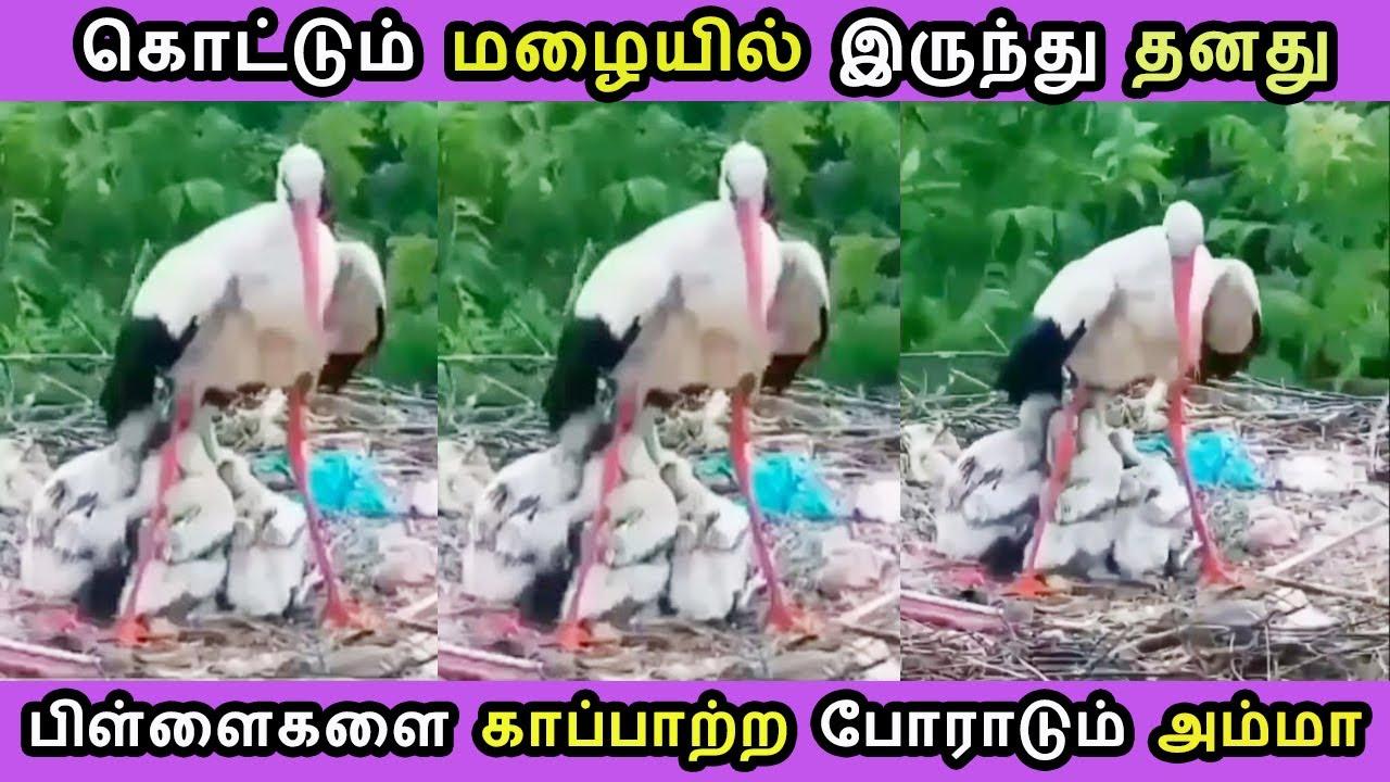 கொட்டும் மழையில் இருந்து தனது பிள்ளைகளை காப்பாற்ற போராடும் தாய் Tamil Cinema News