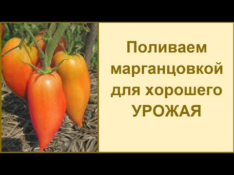 Марганцовка + борная кислота - удобряем, поливаем, подкармливаем @Огород, где все растет