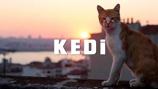 KEDI - TRAILER 1