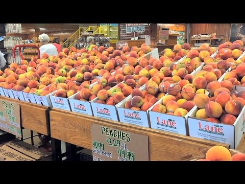 Sweet Georgia Peach Crop Exceeds Growers' Expectations