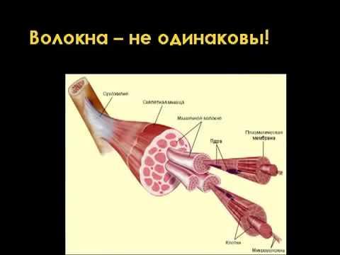НАУКА: АНАТОМИЯ ПРИСЕДАНИЙ. Часть 1 (RUS Sportfaza)