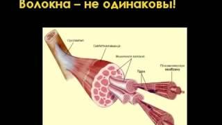 видео Анатомия мышц тела человека, мускулатура тела культуриста, бодибилдера
