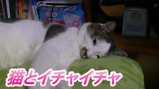 リラックスしてる猫とイチャイチャして遊ぶ