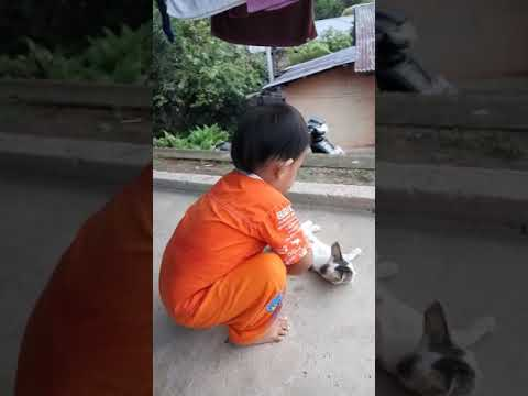 baby is afraid of cat