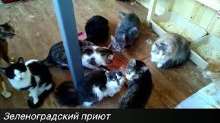 Домики для кошек появились в зеленоградском приюте. Но животным нужна помощь