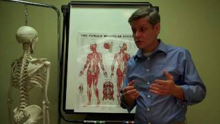 ASHA Anatomy + Physiology Muscle Overview