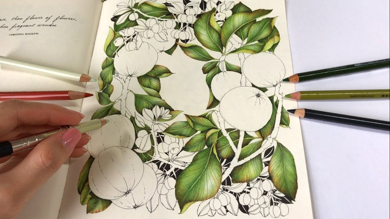 LEAVES DRAWING | Crabapples - Part 1 | The Flower Year Coloring Book ...