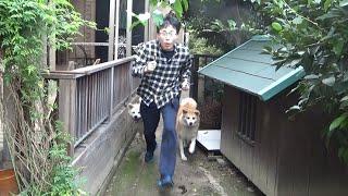 秋田犬に追いかけられたら足が速くなるか検証してみた!