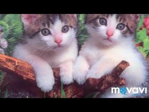 Cute Cat - For Cat Lovers | Cat Pictures | White Cute Catis | Adorable Little Cat