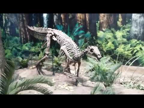 Carnegie Museum Of Natural History 2017 Pt 1