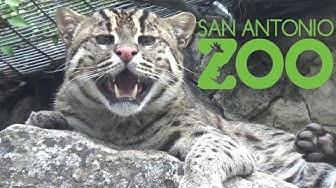 San Antonio Zoo Tour & Review with The Legend