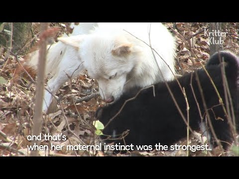 Dog Hides Her Puppy From Fear of Adoption | SBS Animal