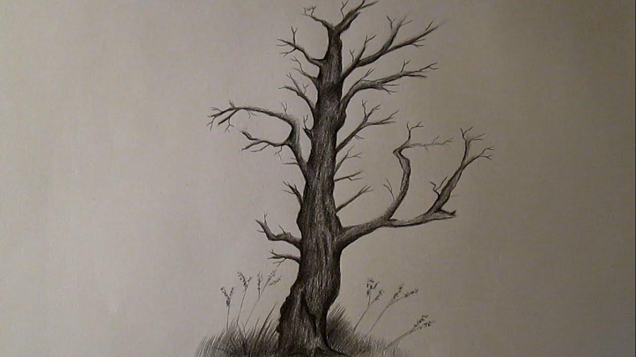Cómo Dibujar Un árbol Seco Y Sin Hojas árbol A Lápiz Hd Youtube